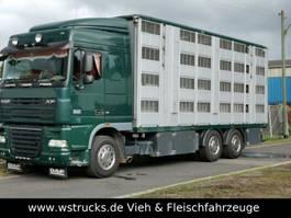 paardenvrachtwagen DAF XF105/410 Spacecup Menke 4 Stock